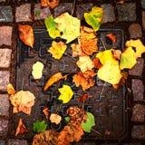 在一条街道上的秋天五颜六色的叶子在城市 室外秋天co 免版税库存照片