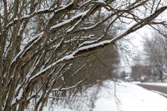 在一条街道上的积雪的分支在冬天多云天 图库摄影