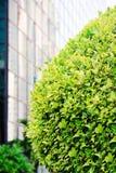 在一条街道上的绿色树在城市 免版税库存图片