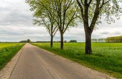 在一条表面上不尽的乡下公路旁边的三棵树 库存照片