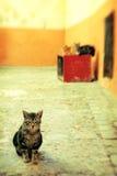 在一条被修补的街道上的三只猫 图库摄影