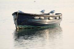在一条被停泊的小船的海鸥 免版税库存图片