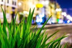 在一条被点燃的街道的背景的绿草宏指令在晚上 图库摄影