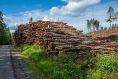 在一条路旁边的木材在森林里 免版税库存图片
