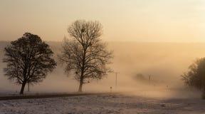 在一条路旁边的树在雾 免版税库存照片