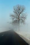 在一条路旁边的树在雾 免版税图库摄影