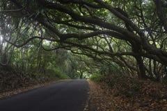 在一条路的密集的植被在大岛,夏威夷 库存照片