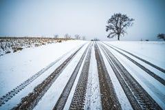 在一条路的树在冬天季节期间 库存图片