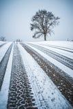 在一条路的树在冬天季节期间 图库摄影
