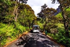 在一条路的汽车在森林里 免版税库存照片