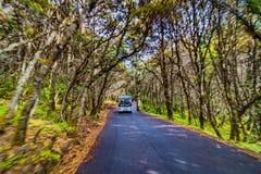 在一条路的汽车在森林里 图库摄影