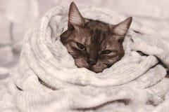 在一条软的温暖的毯子包裹的灰色猫 做准备 免版税库存照片