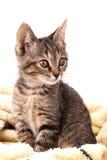 在一条软的黄色毯子的灰色平纹小猫 库存图片