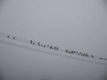 在一条输电线的鸟在雾 库存图片