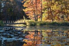 在一条输送管的一点桥梁在森林湖 库存图片