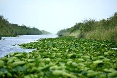 在一条运河的小船在大沼泽地国家公园 免版税库存图片
