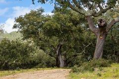 在一条远足的道路的树有远足的标记 免版税库存照片