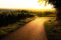 在一条道路的日落在葡萄园里 免版税库存图片