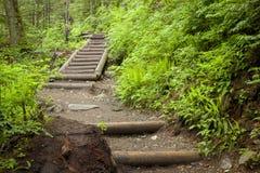 在一条道路的步在森林 图库摄影