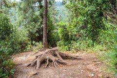 在一条道路的老树桩在森林里 免版税库存图片