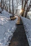 在一条道路的长凳在公园 免版税库存照片