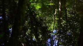 在一条镇静流动的溪的起波纹的森林地反射 影视素材