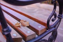 在一条长凳的秋叶在公园 库存照片