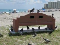 在一条长凳的鸟,在海滩,在木星,佛罗里达 库存图片