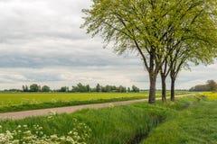 在一条长的乡下公路旁边的三棵树 免版税库存图片