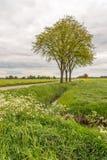 在一条长的乡下公路旁边的三棵树 库存照片