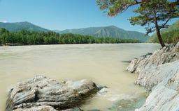 在一条风雨如磐的河的河岸的美好的夏天风景 免版税图库摄影