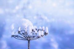在一根干枝杈的雪 库存照片