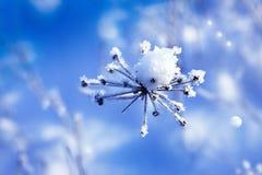 在一根干枝杈的雪 免版税库存图片