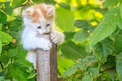 在一根木棍子的白色小猫在绿色灌木中 图库摄影