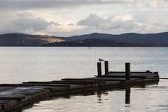 在一根杆的一只海鸥在一个码头,有美好的水反射的 免版税库存照片