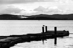 在一根杆的一只海鸥在一个码头,有美好的水反射的 免版税图库摄影