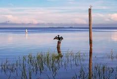 在一根杆的鸟在海 免版税库存照片