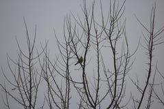 在一根枝杈的鸟在多雨天气 免版税库存图片