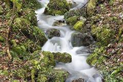 在一根枝杈结冰在森林里水的滴  免版税库存照片