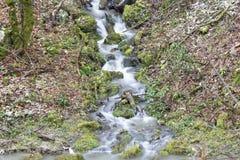 在一根枝杈结冰在森林里水的滴  免版税库存图片