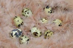 在一根桃红色羽毛的鸡蛋 免版税库存图片