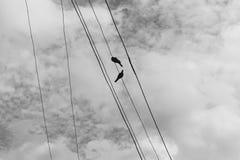 在一根电导线的两只鸽子反对与云彩的蓝天 免版税图库摄影