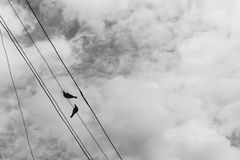 在一根电导线的两只鸽子反对蓝天 免版税库存图片