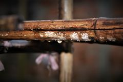 在一根竹棍子的雨下落 库存照片