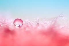 水滴在一根红色羽毛的 与下落的美好的宏指令 免版税图库摄影
