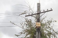 在一根老木岗位电杆的生锈的电子接线盒 木杆 免版税库存图片