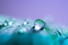 水滴在一根蓝色羽毛的 提取宏指令 选择聚焦 免版税库存图片