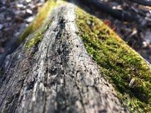 在一棵下落的树的真菌 免版税库存图片