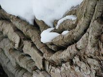 在一棵下落的树的积雪的吠声 免版税库存图片