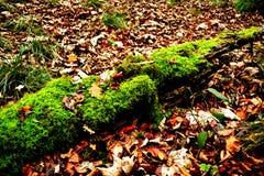 在一棵下落的树的青苔在秋天公园 库存图片
